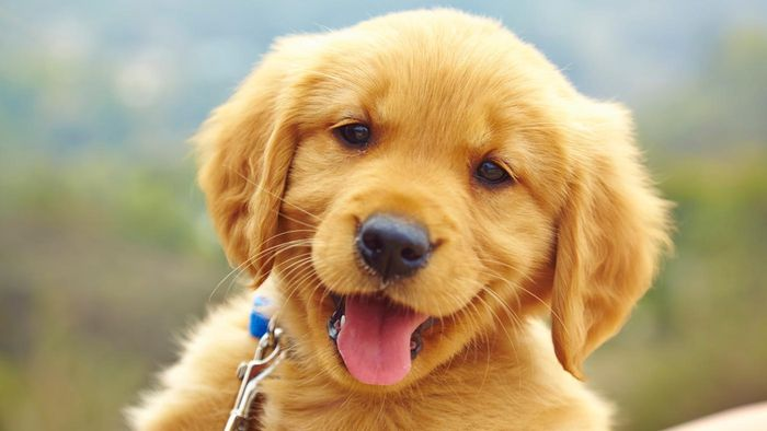 What Are Some Things That a Puppy Can Learn in Puppy Preschool?