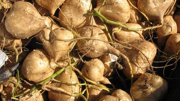What Is a Good Recipe for Jicama?