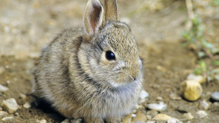 Where can you find baby rabbits for adoption?