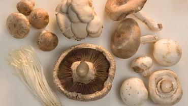 What Are the Different Types of Mushrooms?
