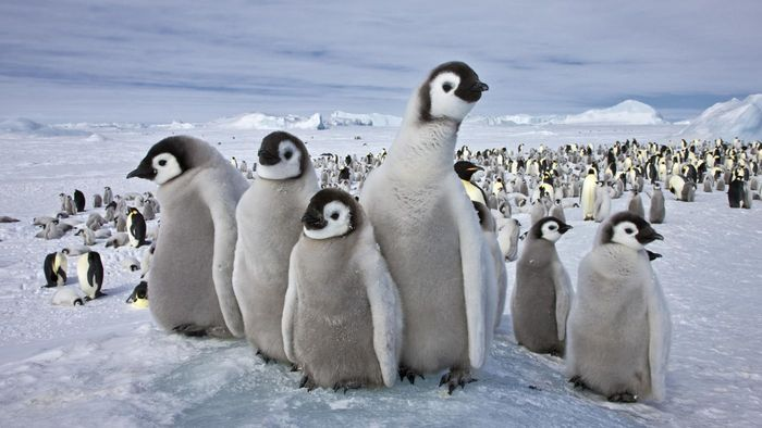 What Are Some Cool Facts About Penguins?