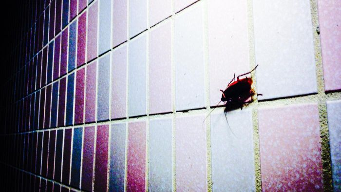What Are Some Facts About Cockroaches?