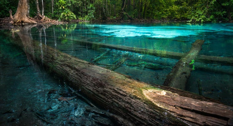 What Are the Different Types of Ecosystems?