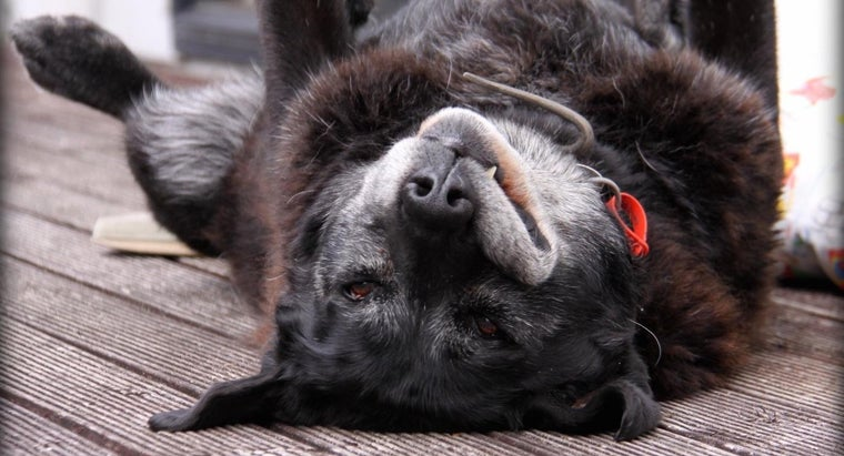 What Are Some Common Health Problems in Dogs?
