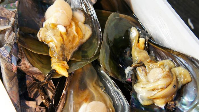 What are some common types of shellfish?