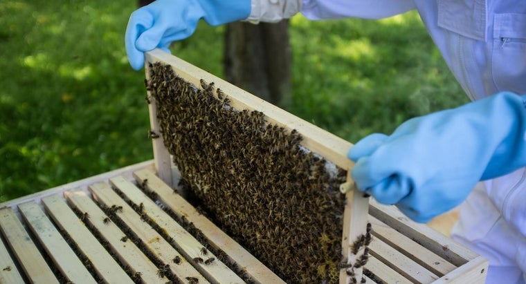 How Can You Plan to Make a Bee Hive?