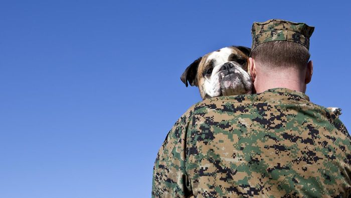 Who Was the Most Decorated Dog War Hero?