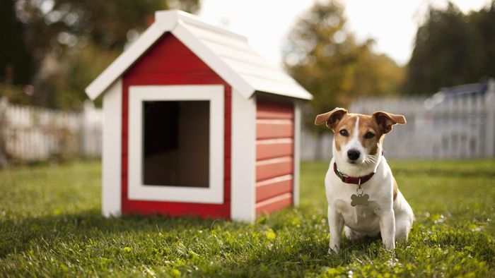 How Do You Choose a Good Used Dog House?