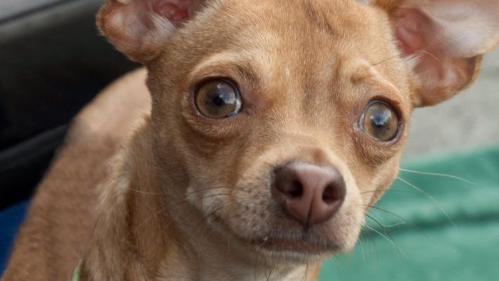 What Are Some Small Dog Rescue Organizations in Florida?