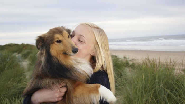 What are some collie rescue groups in Michigan?