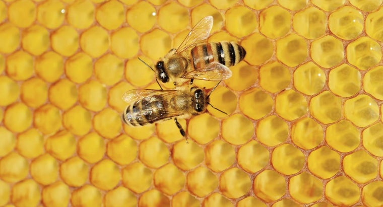 What Are the Health Benefits of Bee Propolis?