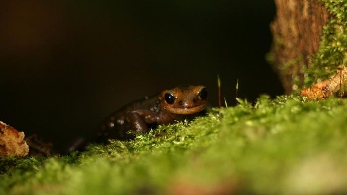 What Should You Feed a Pet Salamander?