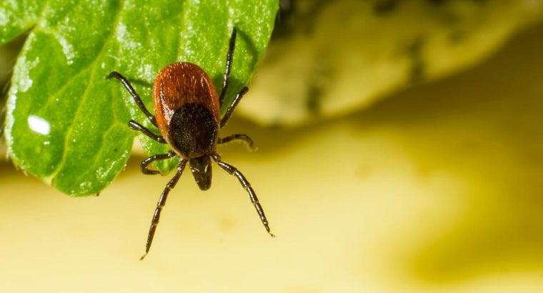 How Can You Prevent a Tick Bite?