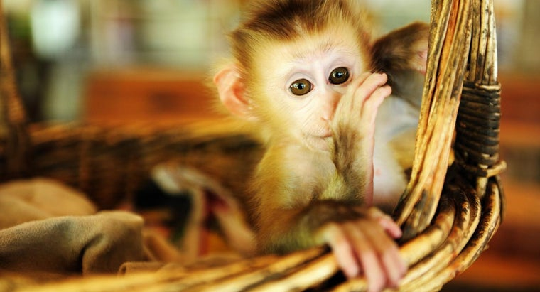 Where Can You Find Information on Monkeys for Sale?