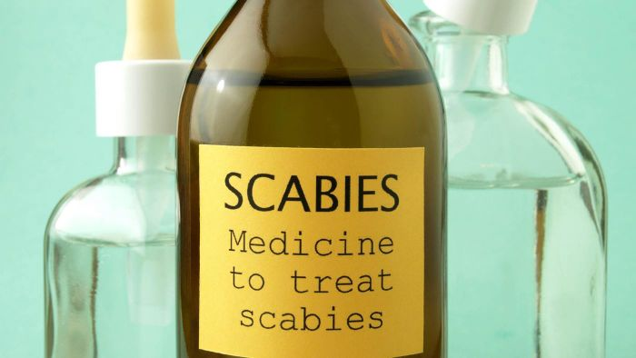 What Are Scabies?