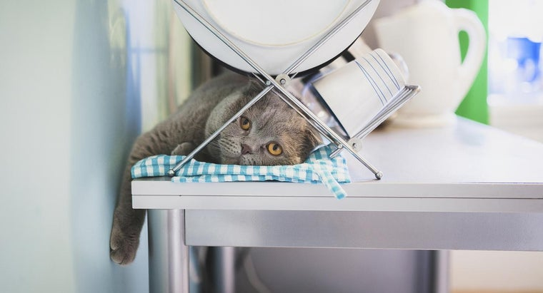 Where Can You Find Funny Cat Videos?
