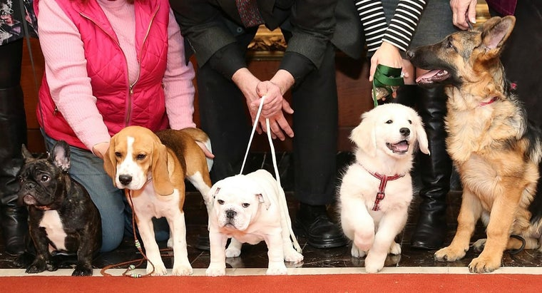 What Is the American Kennel Club?
