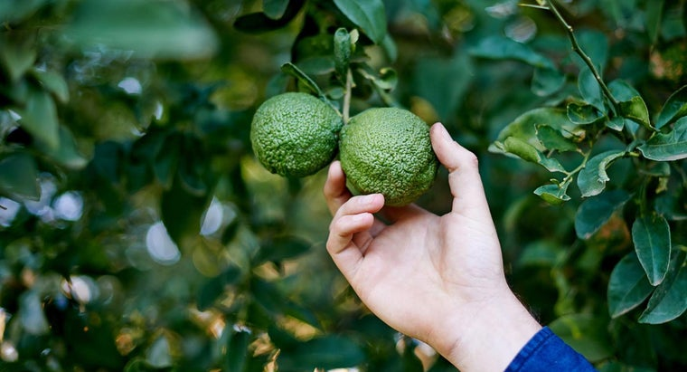 What Are Some Tips for Avocado Tree Care?