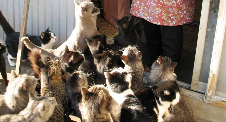 Where Do Cats Outnumber Humans 6 to 1?