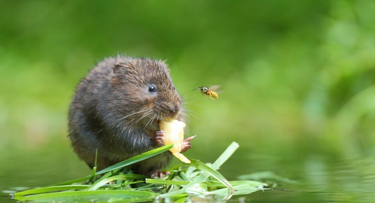 What Are Some Tips for Getting Rid of Voles in Your Lawn?