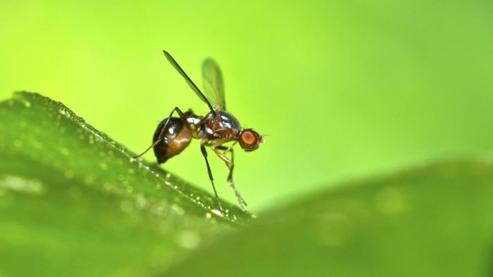 What Are Ways to Get Rid of Fruit Flies?
