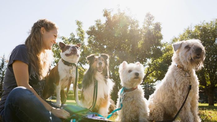 How much do dog walkers typically earn?