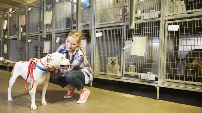 Where Is the Garland Animal Shelter?
