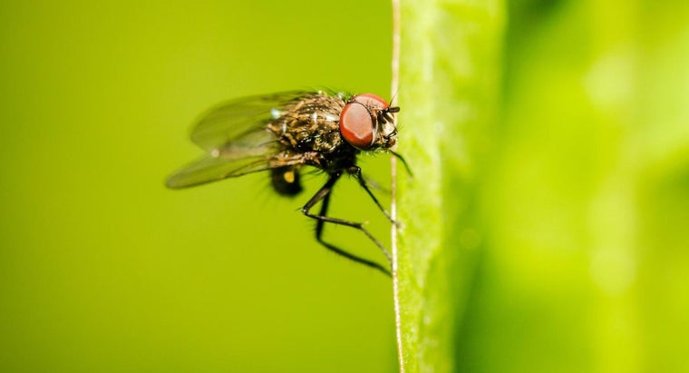 What Is a Gnat?