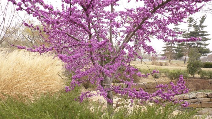 What Are Some Key Identification Factors for an Oklahoma Tree?