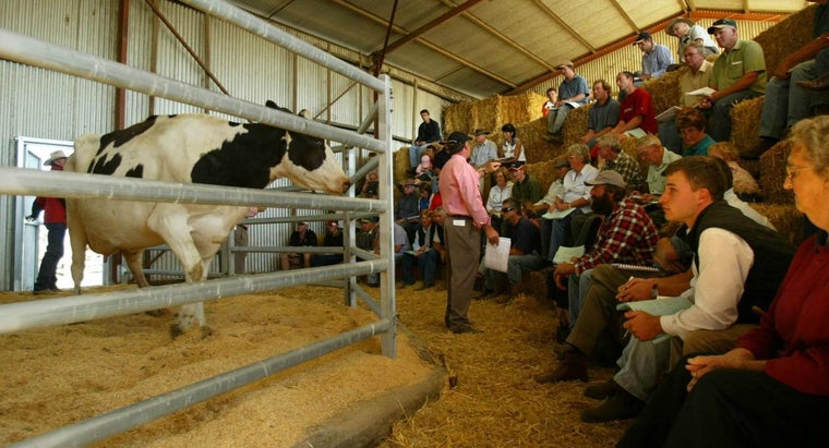 Is Livestock the Only Thing Sold at a Livestock Sale Barn?