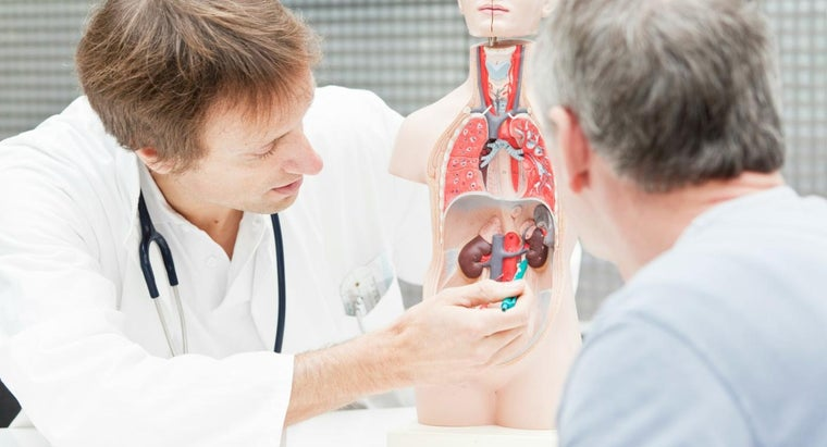 What Are Some Ways to Improve Kidney Health?
