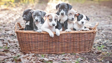 What Is the Best Dog Food for Pit Bull Puppies?