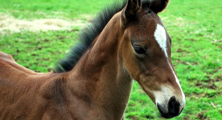 How Do You Find Rental Properties That Allow Space for Horses?