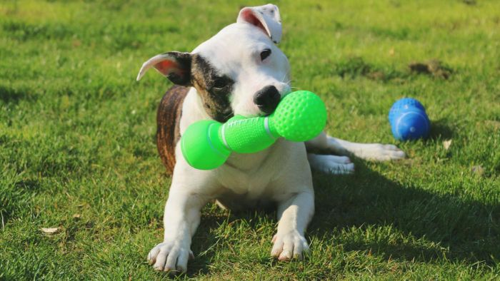 What Are Some Indestructible Dog Toys?