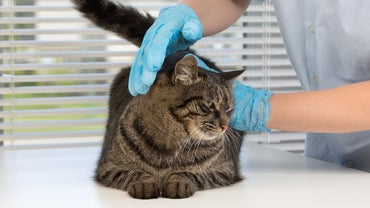 What Services Do Free Vet Clinics Offer?