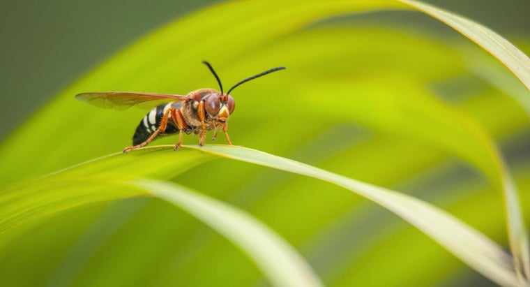 What Are Some Facts About Wasps?