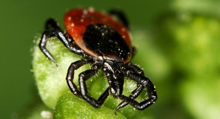 What Are the Symptoms Associated With Tick Bites?