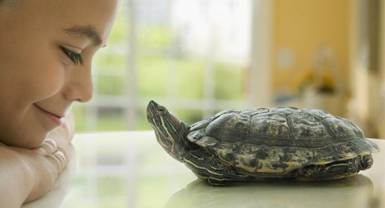 What Are Some Turtle Facts for Kids?