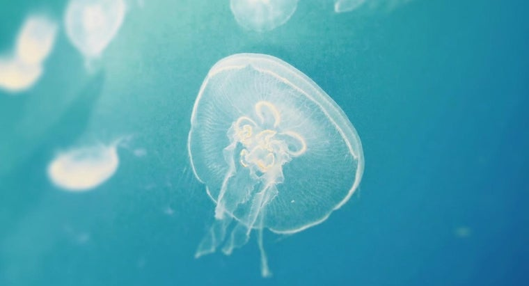 How Do You Treat a Jellyfish Sting?