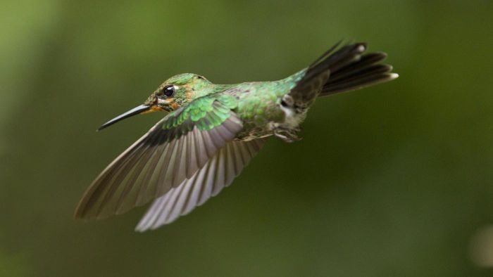 What Flowers Can You Plant to Attract Hummingbirds?