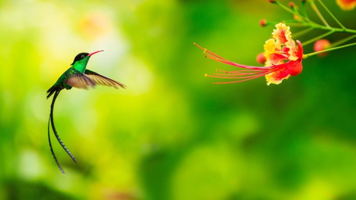 When Are Hummingbird Migration Times?