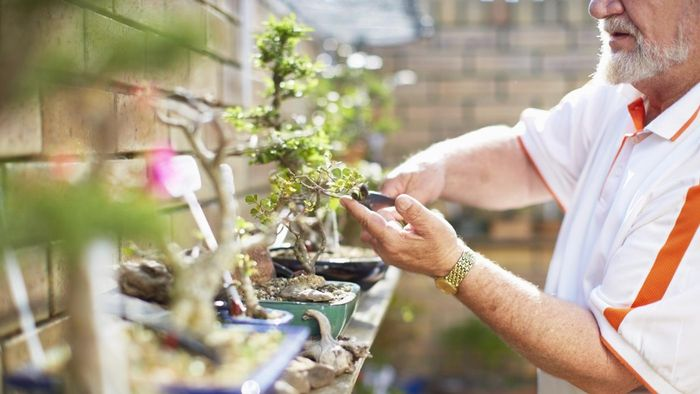 What Are Some Bonsai Trees That Are Suitable for Beginners?