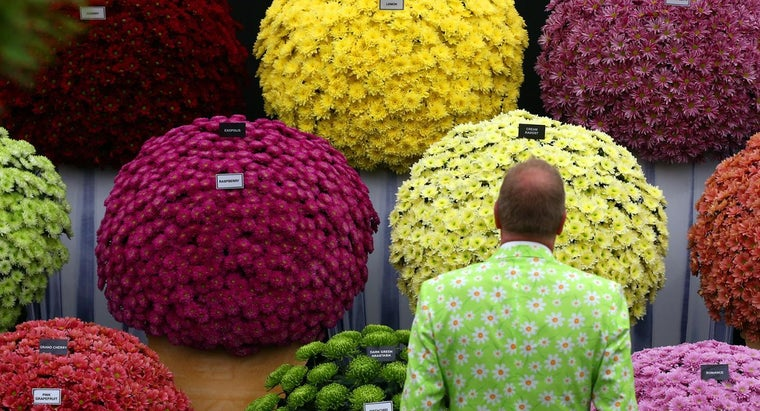 What Is the Difference Between Garden Mums and Florist Mums?