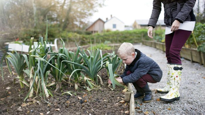 What Are Some Good Vegetables to Plant in the Fall?