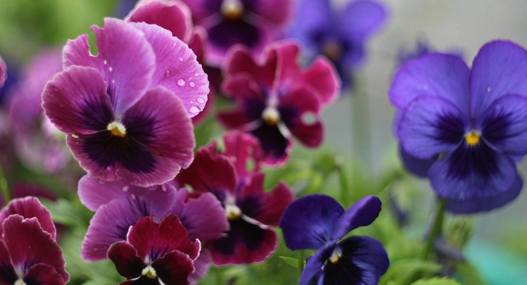 What Flowers Are Good to Plant in Fall?