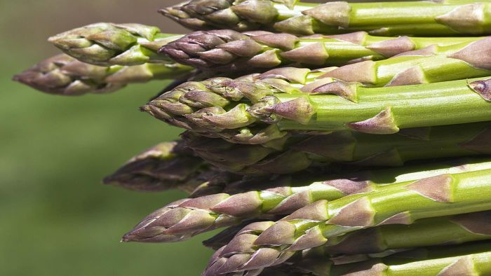 Does Evidence Suggest That Asparagus Fights Cancer?