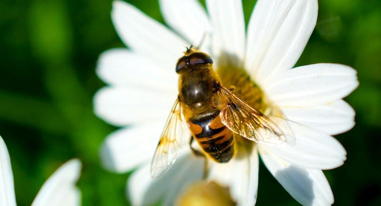 What Kinds of Flowers Are Good for Attracting Bees?