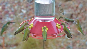 How Do You Make Hummingbird Nectar?
