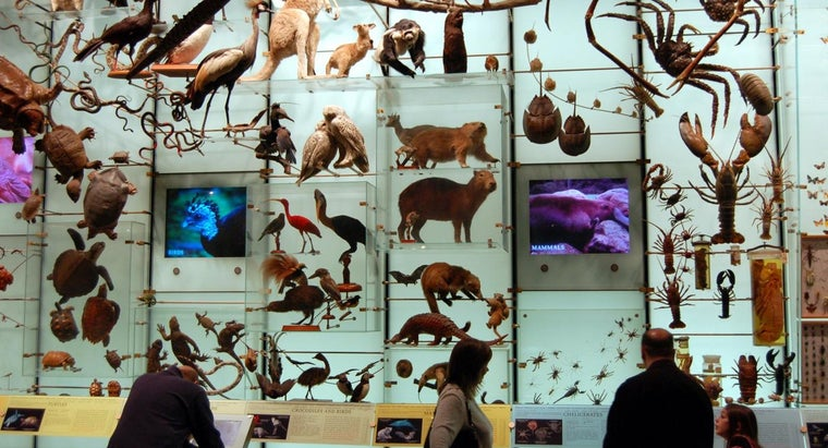 What Is Biodiversity, and Why Is It Important?