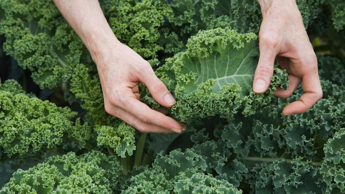 What Are the Nutritional Facts for Kale?